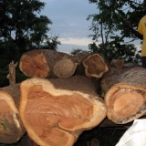 14   The Afzelia africana logs
