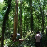 067   Finding teak trees tall enough for the masts has been difficult