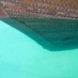 007   التشبيك ظاهر تحت الماء عند مقدم لسفينة