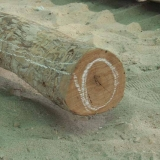 018   تمييز كل جزء من خشب بونا بعلامة محددة
