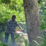 10   قطع الأشجار في غانا