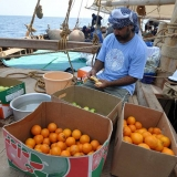 101   Adam Al Baluchi washes fruit