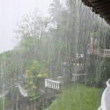 085   A tropical downpour